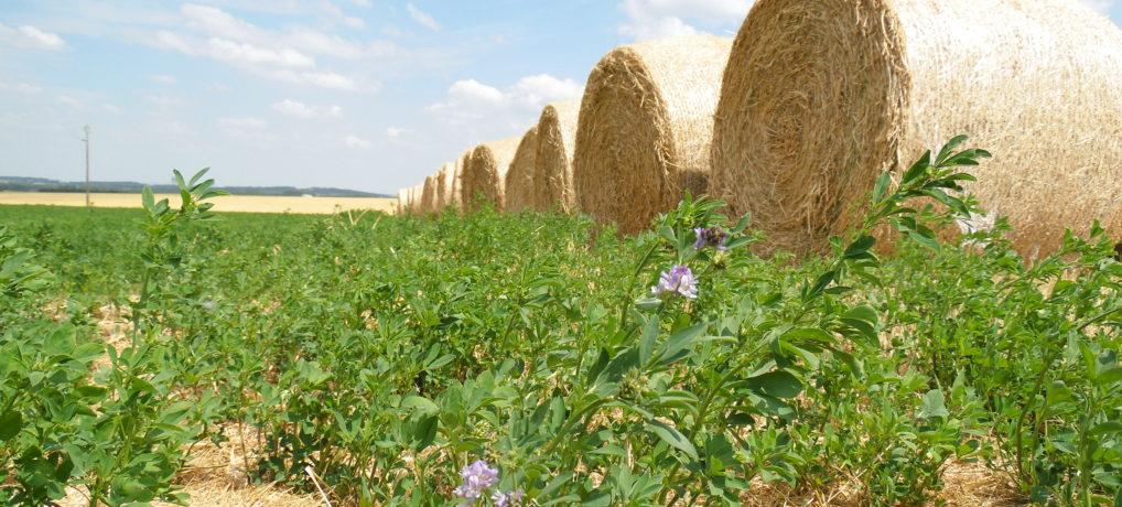 AMI : Accompagner les organisations professionnelles agricoles dans le développement de l'agro-écologie